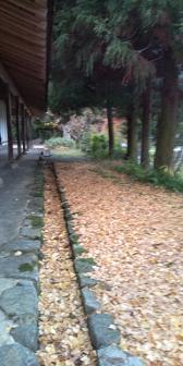 20101207164750.JPG